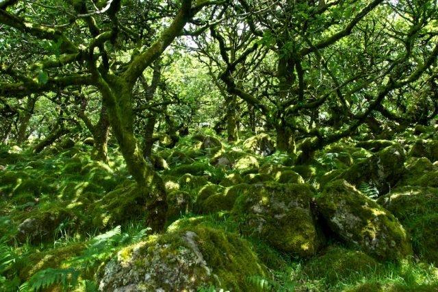 Wistman's Wood - Brian Ralphs via flickr CC BY-2.0