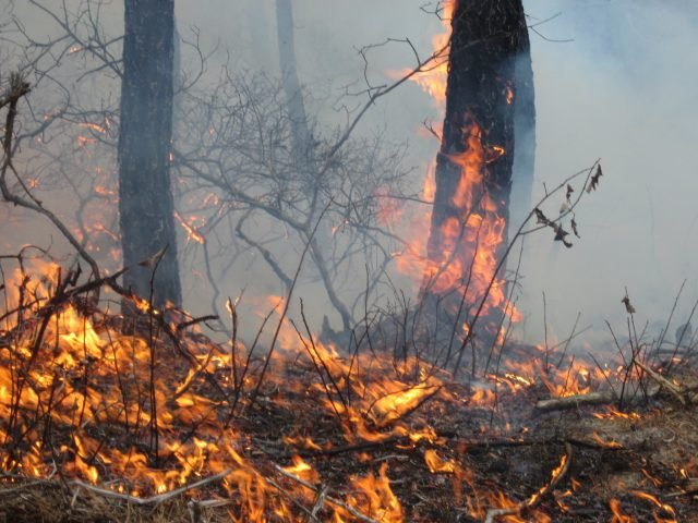 Fire in Pine Barrens - U.S. Fish and Wildlife Service Northeast Region via flickr public domain
