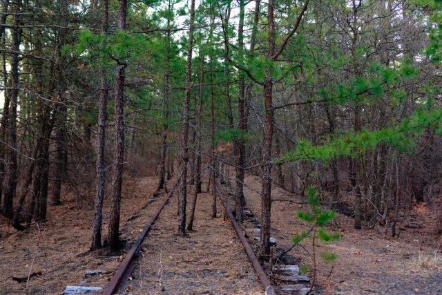 Pine Barrens lost tracks - Matt Swern via flickr CC BY-2.0