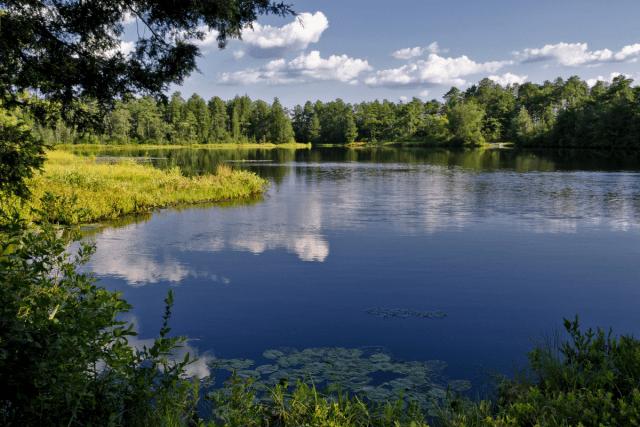Pine Barrens water- iShootPhotos LLC via Getty Images