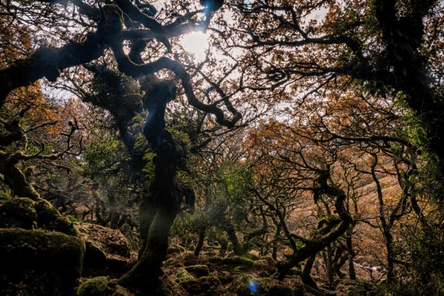 Wistman's Wood - Will Tudor 3 via Getty Images